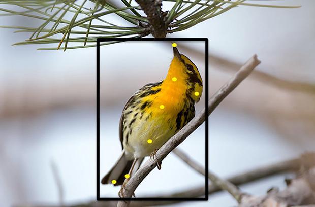 Cornell's website can ID bird species through photos