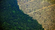 Apetito de los británicos por el pollo contribuye a desforestar Latinoamérica, advierte Greenpeace