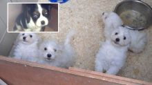 Scammers jailed after making $4.4m selling dying puppies