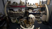 Seizures of medicines using banned animal parts see steep rise