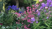 Helen Yemm: easy, colourful perennials, a spotty olive and diseased rhododendron