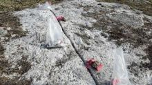 Portofino's Geological Team Completes Initial Exploration and Channel Sampling - Allison Lake North Lithium, Rare Elements Property
