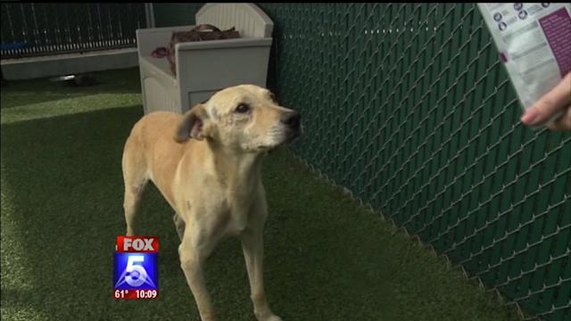 Woman Rescues Dog Kicked In The Ribs