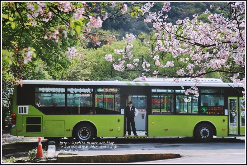 陽明山櫻花季-2018-03-79.jpg
