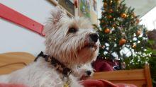 Appell vor Weihnachten: «Tiere sind keine Geschenke»