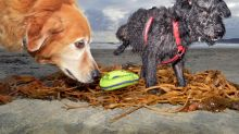 'Dogs on the Beach' — photographer documents the explosion of the canine beach culture
