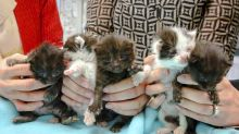 Kitten stowaways found after long journey in steel column