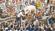 瘦肉精美豬要來台了 高雄街頭民調結果出乎意料