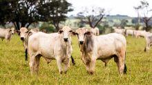Frio mata cerca de 100 cabeças de gado em Mato Grosso