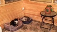 Vovó achava que estava criando três gatos até seu neto descobrir algo inusitado