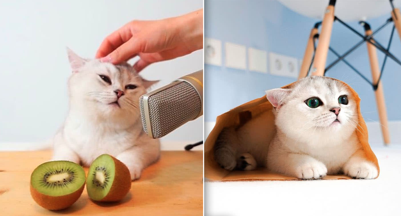 Why more than 32,000 people listen to this cat licking a microphone