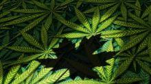 Why Aurora Cannabis, Canopy Growth, and Tilray Sank Today