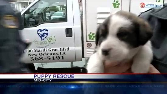 7 puppies rescued in Mid-City