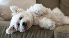 Owning a Dog Makes You Fitter and Healthier, Says Science