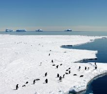 Drive for giant new marine sanctuary in Antarctica