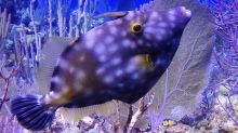 Strange fish dramatically changes color and spots