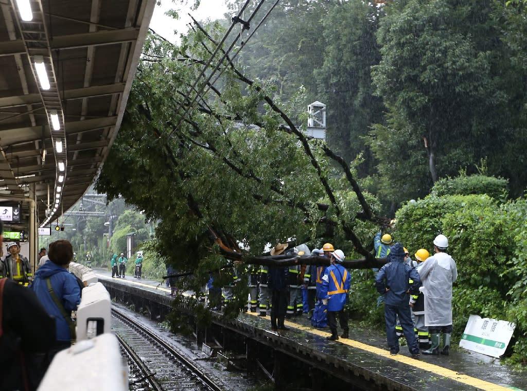 A fallen tree blocks railway in Tokyo, on August 22, 2016 (AFP Photo/Jiji Press)