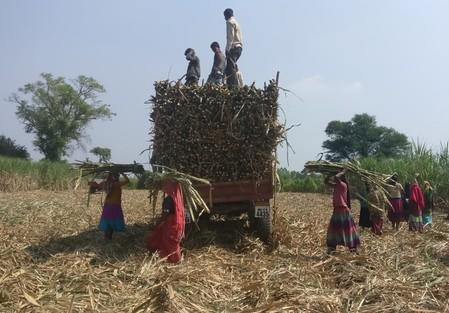 Drought, floods could cut Indian sugar output to three-year low: trade body - Yahoo Finance