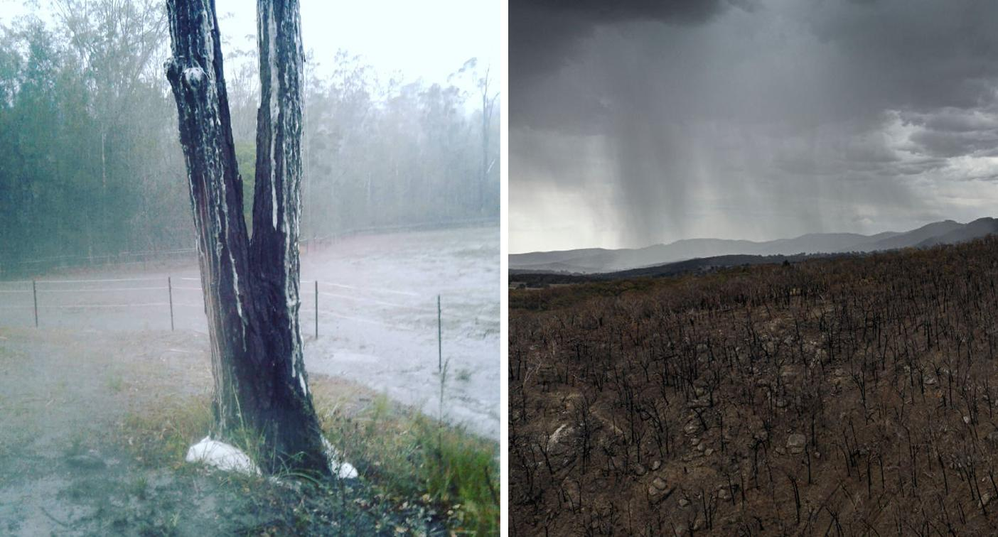 Mystery over why hundreds of trees are 'foaming' in heavy rain