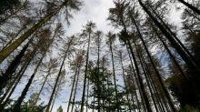 212 défenseurs de l'environnement assassinés en 2019, un record