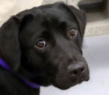 CIA Fires Dog From Bomb Sniffer Program Because It Just Wasn't For Her