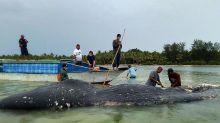 Un cachalot retrouvé mort avec 6 kg de plastique dans le ventre