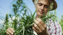 This Small-Cap Marijuana Stock, Up 3,800% in 2 Years, Has Budding Expansion Plans