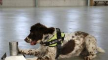 Sniffer dog has £25,000 bounty on its head after finding £6 million of illegal tobacco