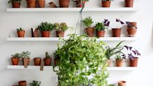 Start small and grow big is the secret to success for houseplant beginners