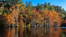 This Fall Foliage Map Predicts Exactly When the Leaves Will Change in Your Area