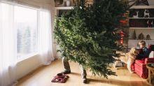 Wann muss der Weihnachtsbaum weg?