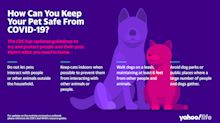 How can you keep your pet safe from COVID-19? The CDC issues new guidelines
