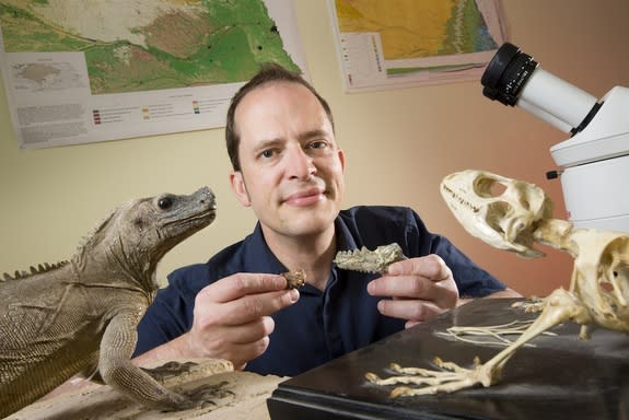 University of Nebraska-Lincoln paleontologist Jason Head holds a fossil and a fossil cast from the jaw of the Eocene lizard Barbaturex morrisoni.