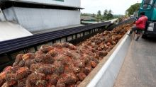 Palm snaps losing streak on stronger exports, soyoil