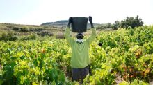 No COVID-19 test, no grape harvest in Spain's Basque Country