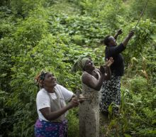 'This is huge': Locust swarms destroy crops in East Africa
