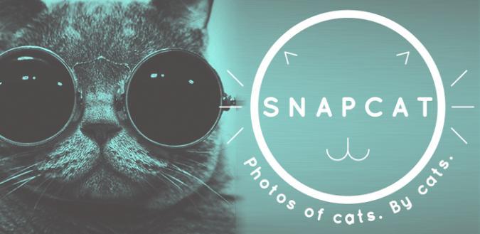 Snapcat: Katzen befreien sich von der Idolatrie im Netz durch Selbstportraits