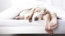 Here's why you really need to stop sleeping in the same bed as your pet