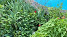 Spot the snake hiding near backyard pool – it's more obvious than you think