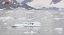 'It gets everywhere': Plastic in Antarctica