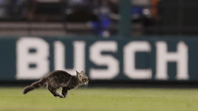 St. Louis Cat Outreach says Cardinals 'bullying' them over Rally Cat