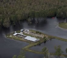 3.4 Million Chickens and Turkeys and 5,500 Hogs Have Died in Flooding From Florence