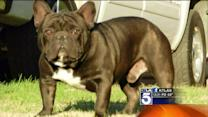 A Canine Crime Wave in SoCal Where 5 Prized Pets Were Stolen From One Home