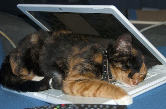 Caturday: Under the (MacBook) cover