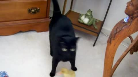 Duckling Follows Cat Around Like Mother