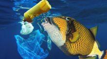 En vidant un poisson, un chef découvre des morceaux de plastique