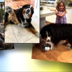 Family dog found tail wagging after wine country inferno