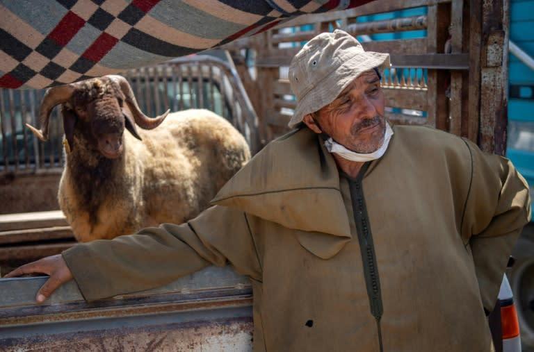 Moroccan farmers sell their livestock ahead of the Muslim festival of sacrifice Eid al-Adha at markets around the kingdom (AFP Photo/FADEL SENNA)