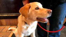 Four-legged guest checks in to Prince George hotel