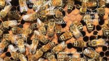 Beekeepers think AI that targets mites can save us from the 'beepocalypse'